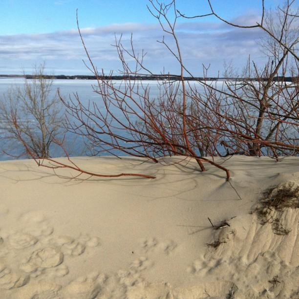 Sandbanks, beach, walking